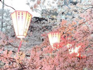 平成最後の目黒川のお花見♪【今後のご予約状況】
