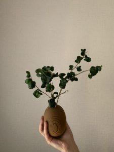 ☆癒しの植物☆磯野